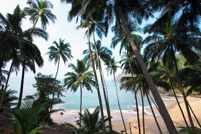 Palme e spiaggia, Goa, India — Foto stock
