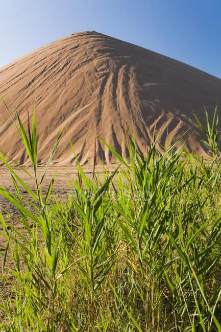 Barkhan і зелені рослини під Синє небо — стокове фото