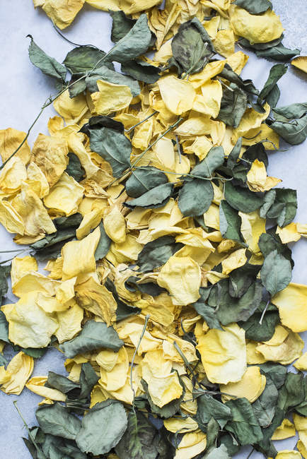 Still Life of petals and dry leaves — Stock Photo