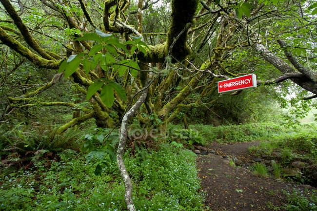 Panneau rouge d'urgence en forêt verte — Photo de stock