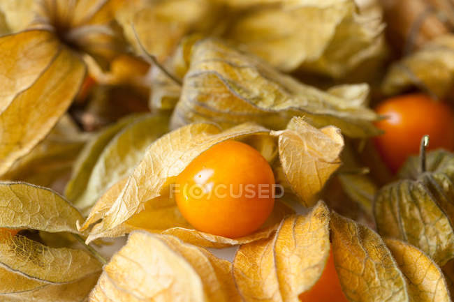 Selective focus of ripe orange Physalis — Stock Photo