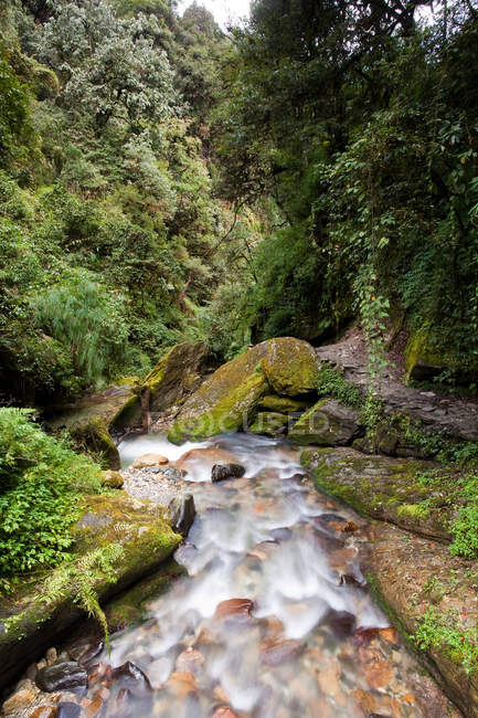 Mountain river in Nepal with beautiful stones and forest around — Stock Photo
