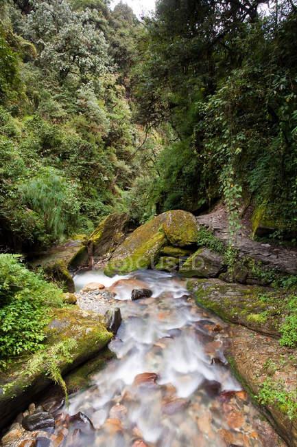 Горная река в Непале с красивыми камнями и лес вокруг — стоковое фото