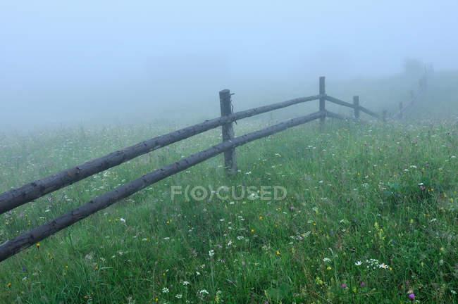 Campo verde nebbioso in Dzembronya zona, Carpazi, Ucraina — Foto stock