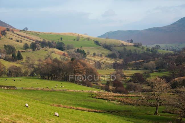 Champ et arbres à la campagne, Cumbria, Royaume-Uni — Photo de stock