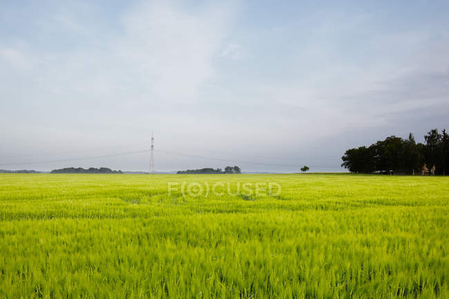 View of green wheat field and sky with clouds — Stock Photo