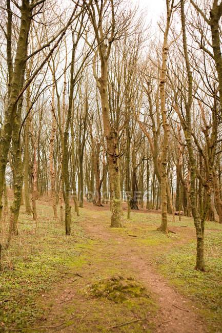 Путь через деревья в лесу осенью, Англия — стоковое фото