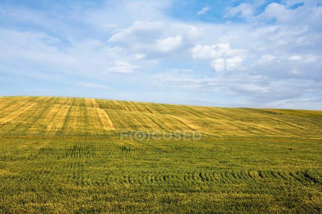 Vista panoramica del campo e delle nuvole — Foto stock