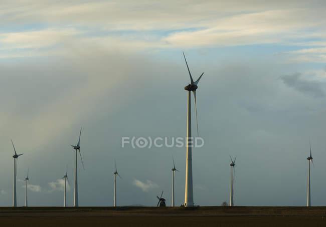 Modern wind turbines around lone traditional windmill, Delfzijl, Groningen, Netherlands — Stock Photo