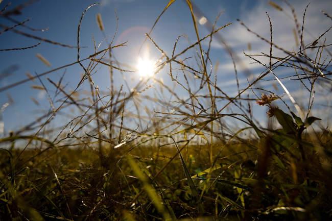 Grass und Sonnenlicht im Feld, Nahaufnahme — Stockfoto