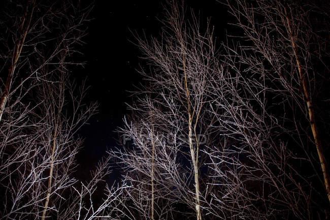 Alberi con illuminazione nel parco di notte — Foto stock