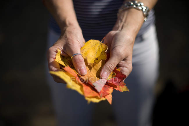 Close up of woman holding autumn leaves — Stock Photo