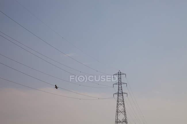 Птах летить поблизу лінії електропередач, чисте небо, низький кут зору — стокове фото