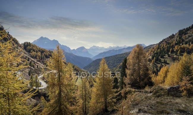 Autumn colours trees of Dolomites, Cortina d'Ampezzo, Veneto, Italy — Stock Photo