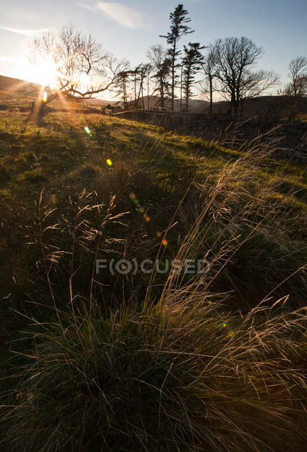 Grass in field with back light and lens flare — Stock Photo