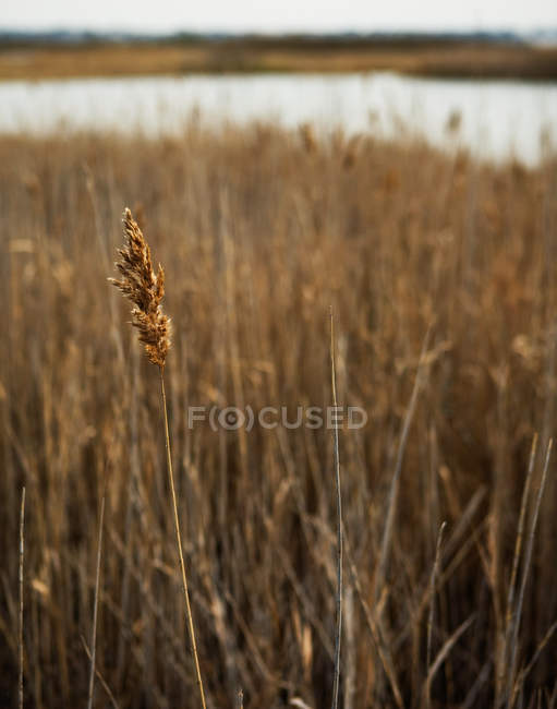 View of dry grass, close up — Stock Photo