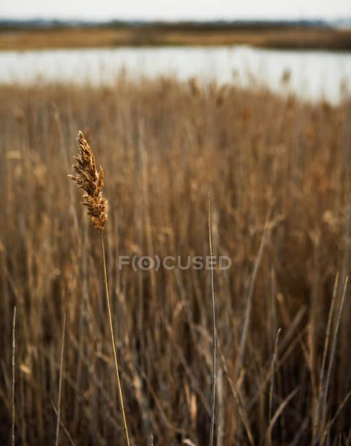 Anzeigen des trockenen Grases, Nahaufnahme — Stockfoto