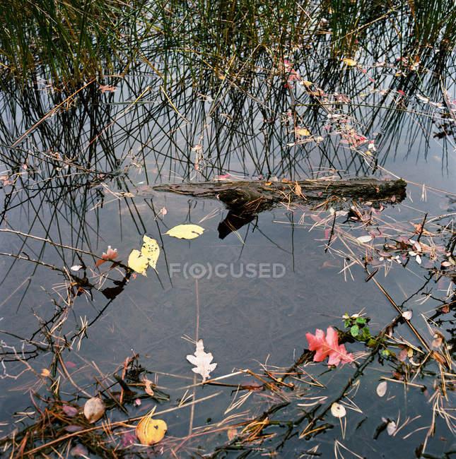Holz und Herbstlaub schwebend in Teich, Nahaufnahme — Stockfoto