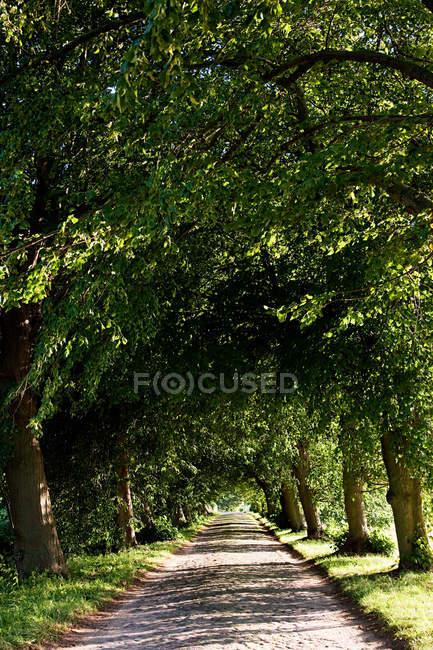 Avenida verde arbolada en Rugen, Alemania - foto de stock