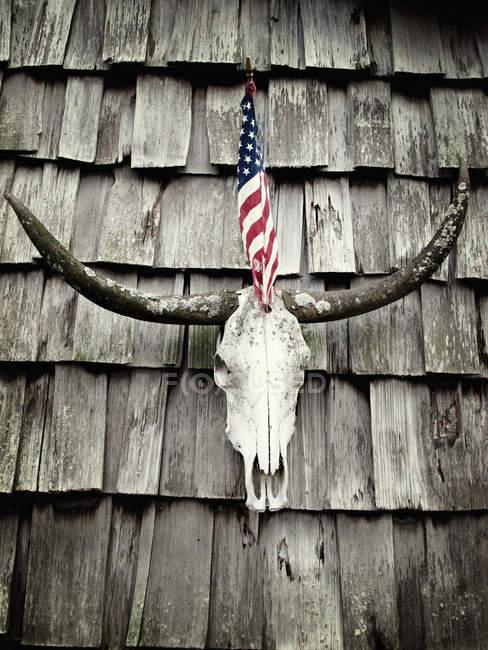 Bnuok роги і нас прапор висить на стіні — стокове фото