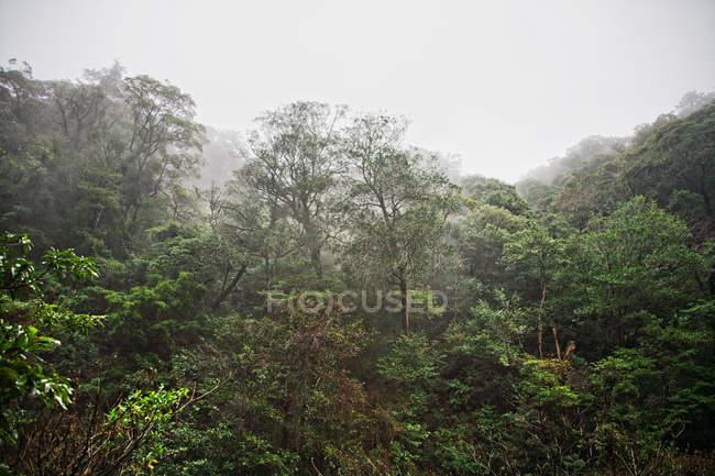 Bosque de escena, Kirishima, Kyushu, Japón - foto de stock