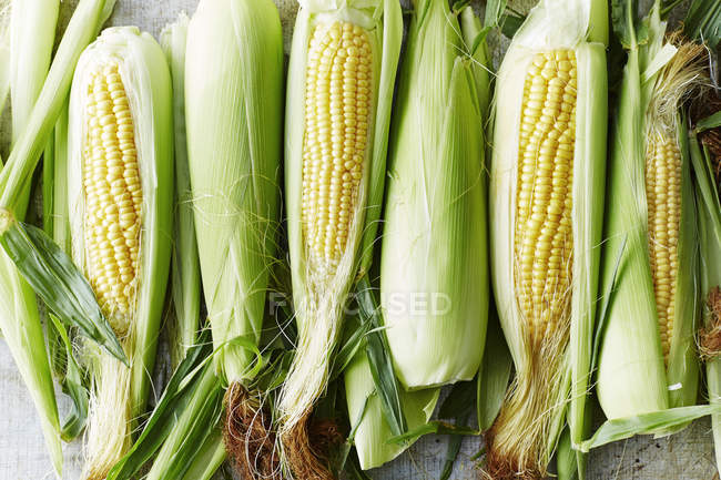 Top view of fresh raw ripe sweet corn on table — Stock Photo