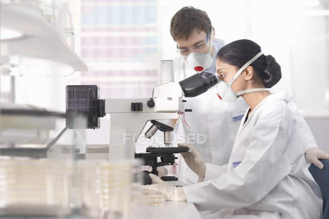 Cientistas em ambiente de isolamento usando máscaras, trabalhando em laboratório de pesquisa, usando microscópio. — Fotografia de Stock