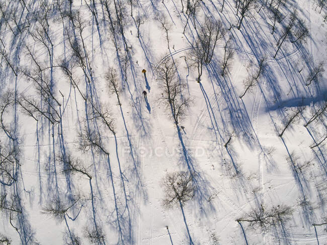 High angle view of snow covered landscape and skiers in Vasterbottens Lan, Sweden — Stock Photo
