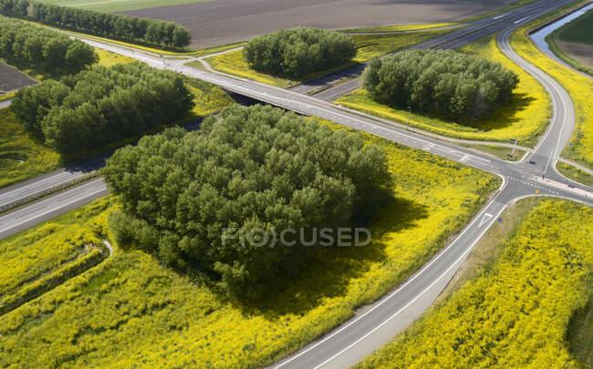 Veduta aerea dello stupro in fiore lungo la strada rurale vuota durante la crisi di Corona. — Foto stock