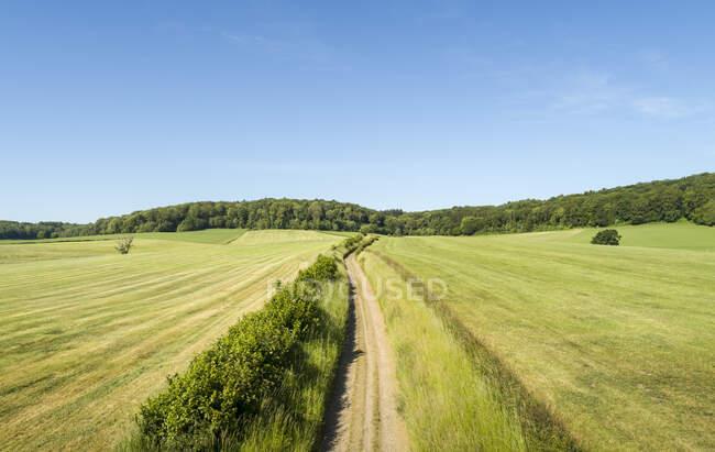 Landstraße durch Felder mit Wald in der Nähe von Limburg, Niederlande. — Stockfoto
