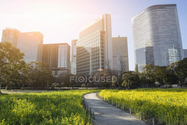 Hermosos rascacielos modernos, Tokio, Japón - foto de stock