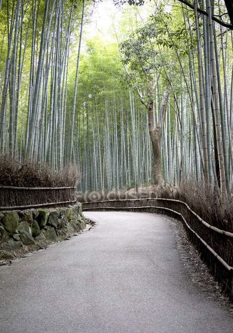 Sagano bamboo forest, Kyoto, Japan — Photo de stock