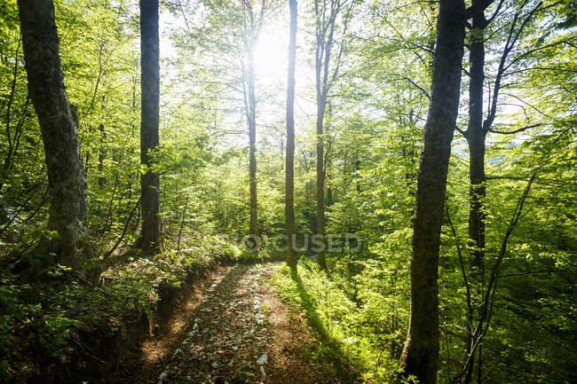 Лесной путь, Печина Мегара рядом с Тарчином, Босния и Герцеговина — стоковое фото