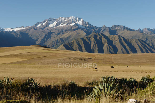 Harvested wheat field, Maras, Sacred Valley, Peru, South America — Photo de stock
