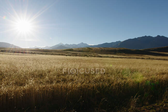Wheat field, Maras, Sacred Valley, Peru, South America — Fotografia de Stock