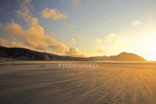 Windswept beach, Golden Bay at sunset, South Island, New Zealand — Stock Photo