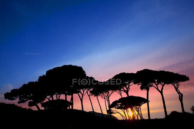 Соснові дерева на заході сонця, затока Баратті, Мармма, Тоскана, Італія. — стокове фото