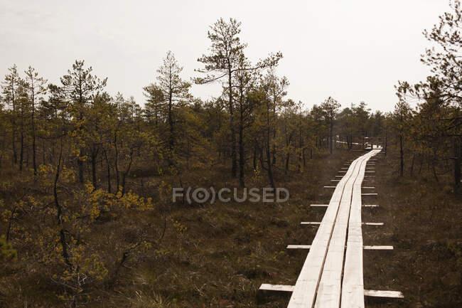 Passerella rialzata nel Parco Nazionale di Kemeri, Lettonia — Foto stock
