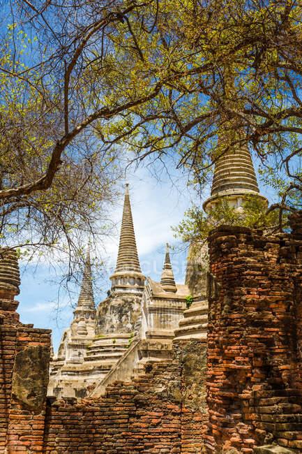 Ват Пха Сі Санфет з деревами і руїнами, Аюттхая, Таїланд — стокове фото