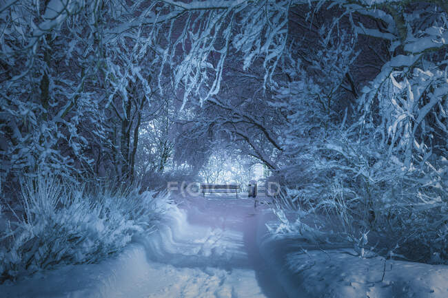 Snow covered trees and path at botanic gardens at night, Reykjavik — Stock Photo