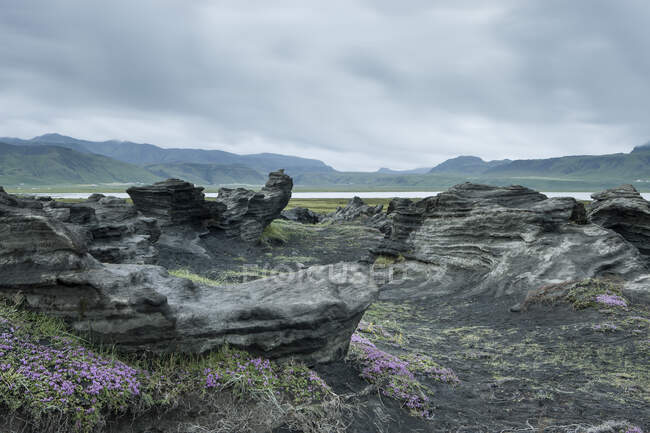Lava field and flowering thyme, Dyrholaey, Myrdalshreppur, Iceland — Stock Photo