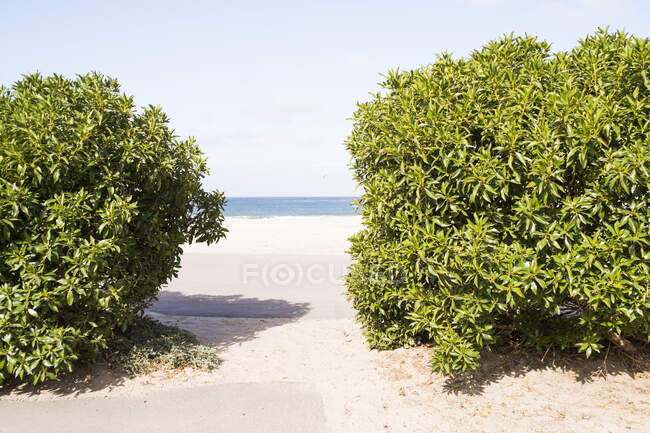Sea view between green bushes, Lompoc, California, USA — Stock Photo