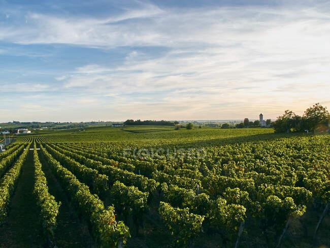 Beautiful Vineyard, Burdeos, Francia - foto de stock