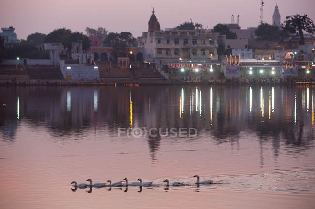 View of waterfront buildings and geese swimming on Pushkar Lake — Stock Photo