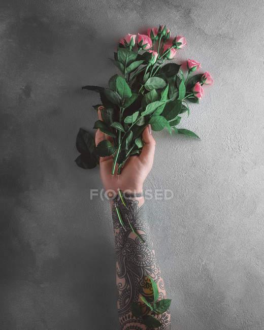 Mano femenina sosteniendo rosas rosadas - foto de stock