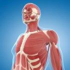 Musculatura superior del pecho - foto de stock