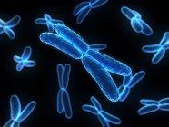 Четырёхрукие хромосомы — стоковое фото