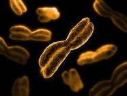 Cromosomas durante la división celular - foto de stock