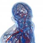 Sistema cardiovascular que transporta nutrientes y oxígeno - foto de stock