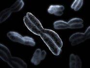 Four-armed chromosomes — Stock Photo